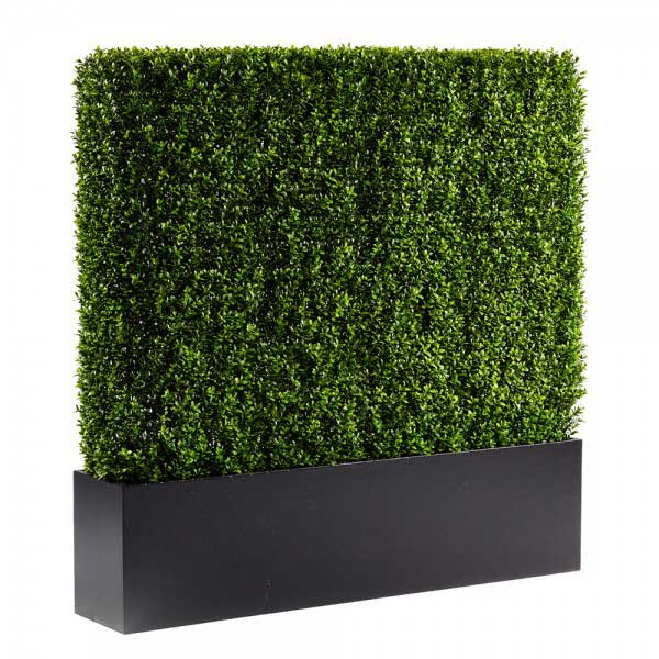 4 ft boxwood hedge wall
