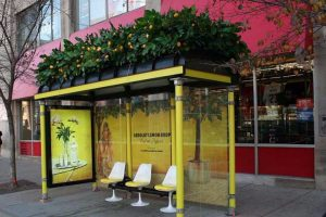 Plants used in experiential marketing campaigns for city-wide brand recognition.
