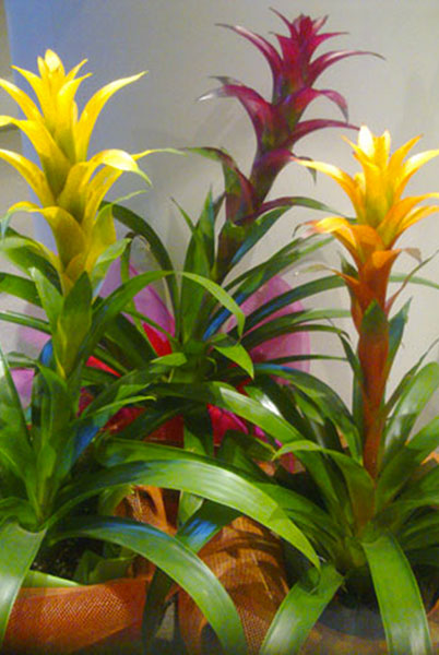 Live plants add color to your event