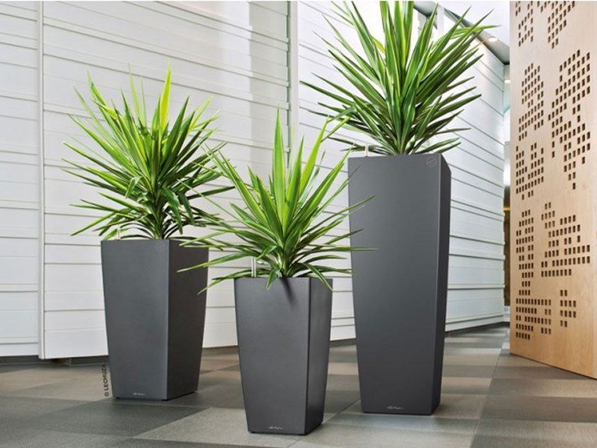 Cubico Family of Planters with Dracenas