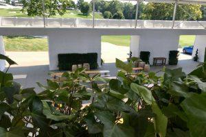 Plant Design - Custom Ivy Planters