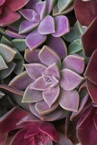 Succulents stay attractive in hot weather - Moët & Chandon Electric Daisy Carnival Las Vegas Motor Speedway