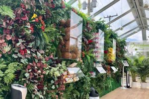 What is a Living Wall?
